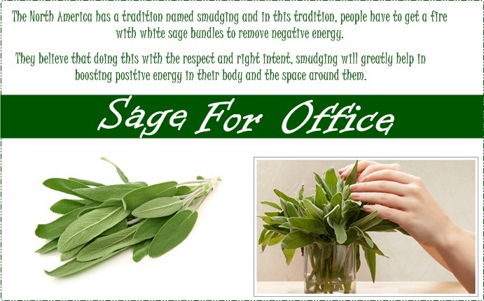 plants for office - sage