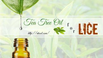 how to use tea tree oil for lice