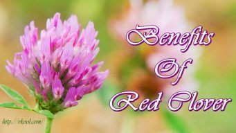 benefits of red clover tea