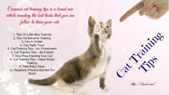 common cat training tips