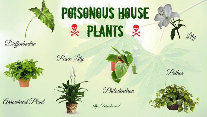 poisonous house plants for humans