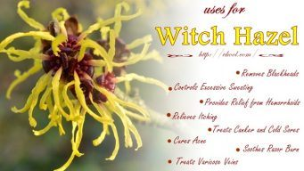 beauty uses for witch hazel