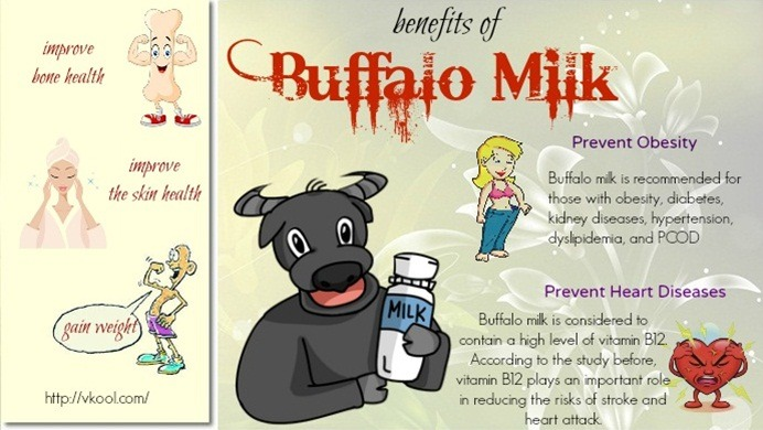 health benefits of buffalo milk