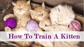 how to train a kitten at home