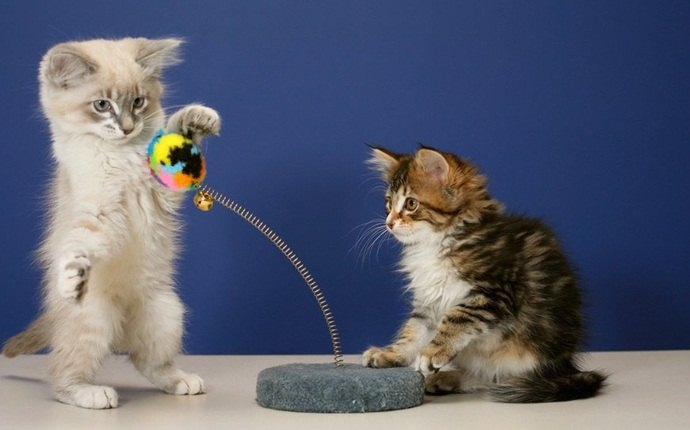 play with your kitten regularly