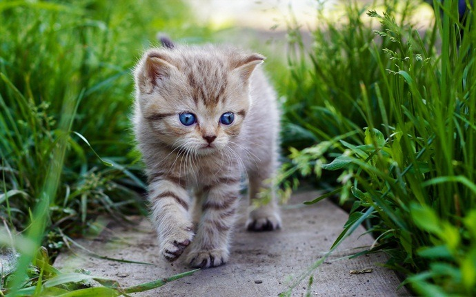 how to train a kitten - how to train a kitten to come when called