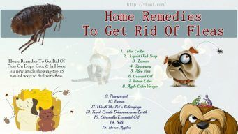 home remedies to get rid of fleas on dogs