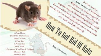 how to get rid of rats outside home