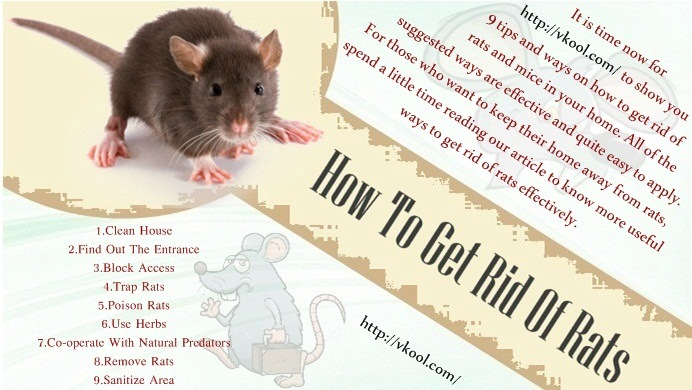 9 Tips And Ways How To Get Rid Of Rats And Mice In Your Home