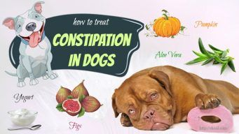 how to treat constipation in dogs naturally