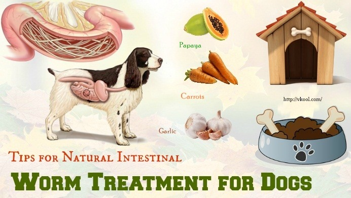 10 Tips For Natural Intestinal Worm Treatment For Dogs